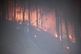 Kawasan hutan Trenggalek terbakar