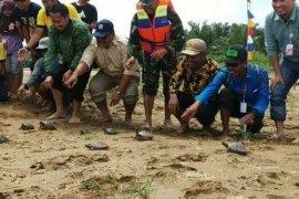 Warga Paser melepas 300 ekor Biuku ke habitatnya