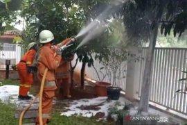 Petugas pemadam evakuasi sarang tawon yang me resahkan warga