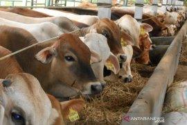 Bekerjasama dengan desa, PT Linggabayu Agro akan buka peternakan sapi di Madina