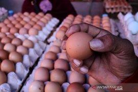 Harga telur naik jelang maulid Page 2 Small