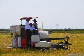 Jejangkit farmers harvest with director general and Balitbangtan