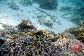 PT Monster Scuba bantah rusak terumbu karang