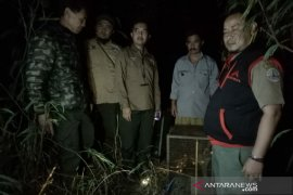 Tiga kukang jawa usai direhabilitasi dilepasliarkan di hutan Kamojang Garut
