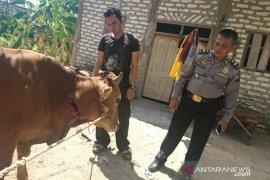 Polisi Sampang gagalkan pencurian sapi