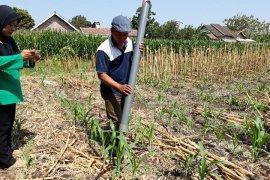 Inilah alat penebar pupuk karya petani dari Kediri (Video)