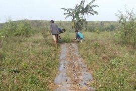 Petani Kutai Kertanegara budi daya Nilam