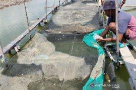 Pemerintah Aceh Timur diminta perhatikan usaha budidaya bibit kerapu