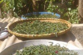 Petani teh Purwakarta didorong hasilkan produk berkualitas