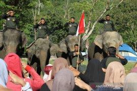 Gajah sumatera ada di antara peserta upacara Hari Pahlawan di Aceh Jaya