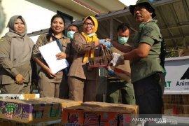 Balai Karantina Bandarlampung lepasliarkan 3.092 burung  hasil tangkapan