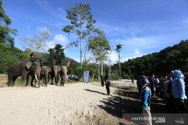 Peringatan Hari Pahlawan Bersama Gajah