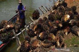 Harga sawit di Abdya terus membaik tembus Rp1.000/Kg