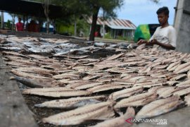 Produksi ikan kayu Banda Aceh menurun