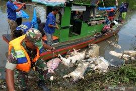 Dandim: Patroli dilakukan terkait keresahan warga banyaknya bangkai babi dibuang ke sungai