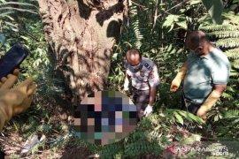 Biadap, Seorang anak mutilasi ayahnya yang berusia 87 tahun