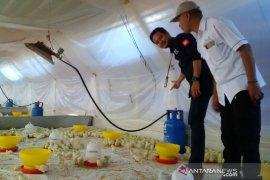 Pertamina sidak penggunaan gas subsidi ke peternakan ayam di Garut