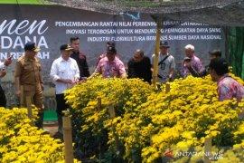 Kementerian Pertanian panen bunga krisan dataran rendah di Cianjur