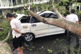 Akibat hujan disertai angin, puluhan pohon tumbang di pusat pemerintahan Banten