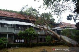 Pohon tua tumbang timpa kantor Wakil Bupati Garut