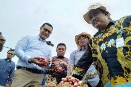 Kementan tantang produsen penuhi kebutuhan benih bawang merah di Tanah Air