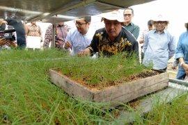 Kementan dorong petani bawang merah beralih gunakan benih biji