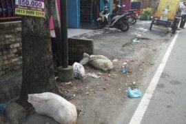 Astaga, bangkai babi dibuang di jalanan Kota Medan