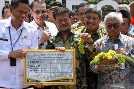 """Mentan Syahrul Limpo beri nama """"Jan Ethes SP1"""" untuk varietas anggur baru"""