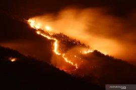 Hutan di Gunung Lawu terbakar
