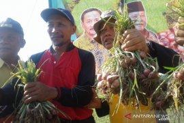 Bupati Tapin panen bawang merah