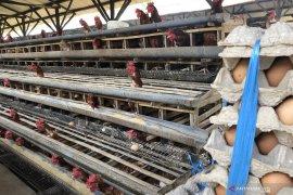Telur produksi Kabupaten Malang dijamin bebas kontaminasi dioksin