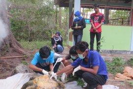 Lima penyu ditemukan mati tak jauh dari PLTU Bengkulu