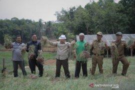 Budidaya bawang merah, Desa Tungkujaya OKU perluas lahan tanam