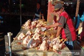 Harga daging ayam kampung di Ambon masih mahal
