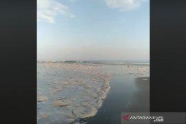 Pantai Teluk Sepang dipenuhi buih diduga buangan PLTU Bengkulu