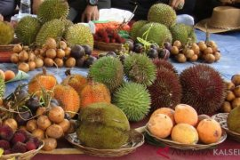 Distanbunnak Aceh Tamiang targetkan BPP tanam tanaman langka di 2020