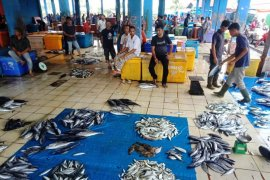 Isu bangkai babi sampai ke laut, harga ikan tongkol di Aceh anjlok