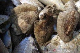DLHK akan beri sanksi jika kematian penyu disebabkan limbah PLTU