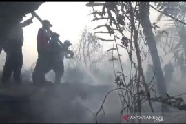 50 hektare gambut di Bengkulu Tengah terbakar