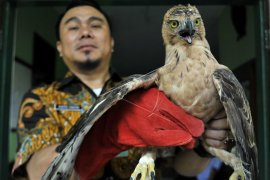 Satu elang jawa dan enam merak hijau dilepasliarkan di Ponorogo
