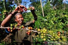 Petani kopi Purwakarta diharap tingkatkan produksi kopi