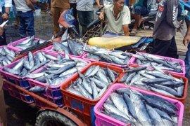 Dinkes Aceh Barat teliti ikan segar terkait isu bangkai babi di laut