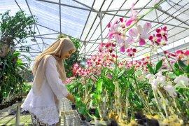 Mengintip budi daya anggrek di eks-lokalisasi Surabaya