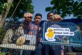 Sekarang pemeliharaan anak ayam jadi penilaian siswa di sekolah