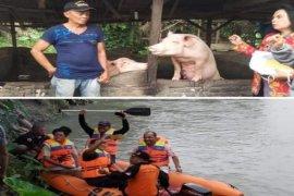 Pemkot Tebing Tinggi lakukan peninjauan ternak babi
