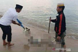 Polres Bangka Barat evakuasi penemuan mayat Di Pantai Tembelok