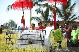 Bupati Gianyar ikut panen demplot padi hibrida bersama petani