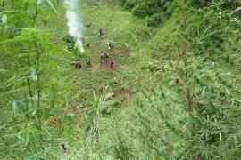 Aparat kepolisian temukan tujuh hektare kebun ganja di Pegunungan Tor Sihite
