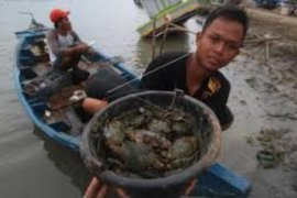 Pendapatan nelayan pencari kepiting di Langkat menurun