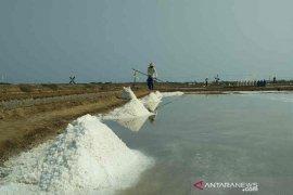 Garam rakyat petani Cirebon tak ada yang membeli